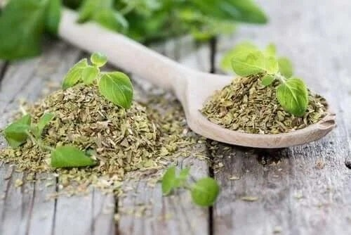 Oregano inclus în remedii naturale pentru torticolis
