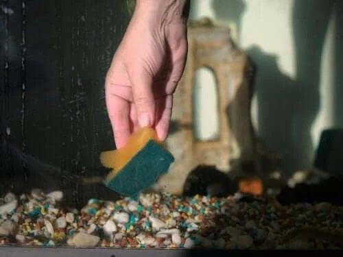 Persoană care știe cum să cureți un acvariu cu pești