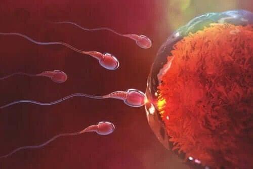 Cât durează să rămâi gravidă după sex?