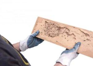 Cum identifici semnele cariilor de lemn