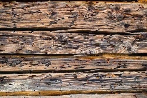 Semnele cariilor de lemn