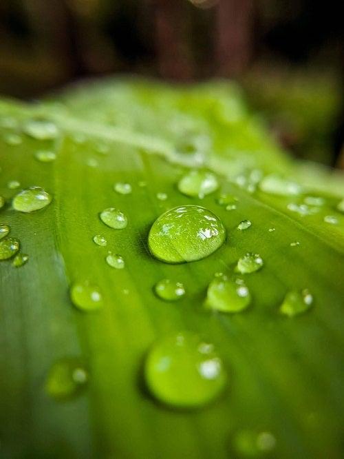 Apă de ploaie pe o frunză