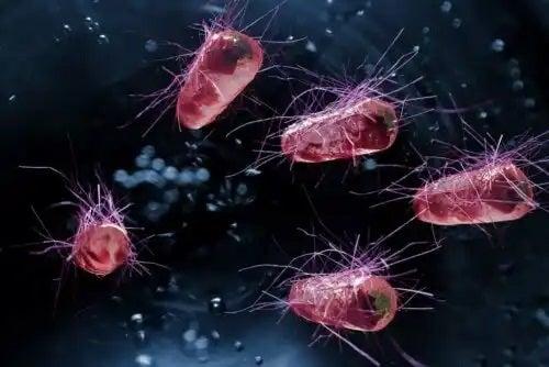 Bacterii care provoacă diareea infecțioasă