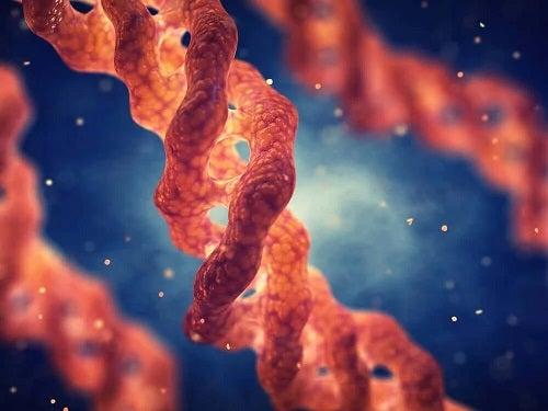 Coagenul marin și bovin la nivel structural
