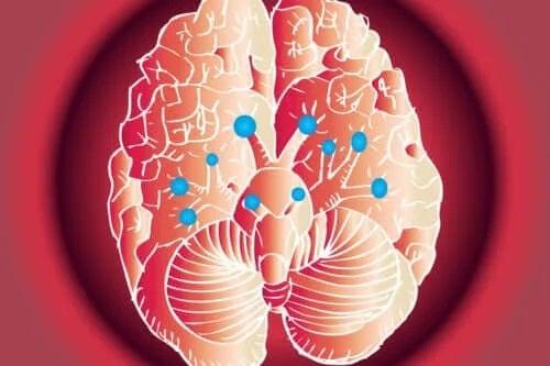 Funcțiile nervilor cranieni