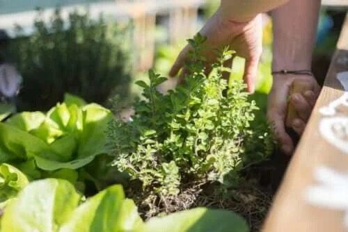 Cele mai bune sfaturi pentru grădinărit pe terasă