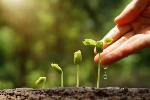 6 sfaturi pentru grădinărit sustenabil