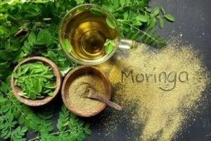 Caracteristicile și utilizările uleiului de Moringa