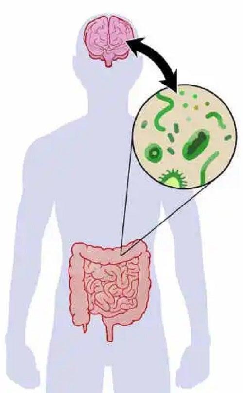 Bacterii intestinale benefice