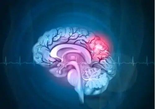 Creier reprezentat grafic