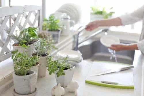 Beneficiile plantelor în bucătărie