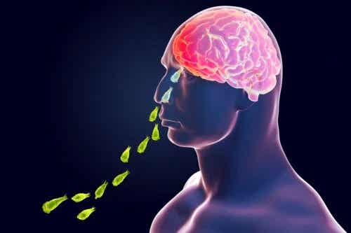 Infecția cu Naegleria Fowleri: amiba care mănâncă creier