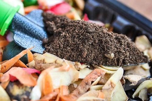 Cum să plantezi ardei acasă cu compost
