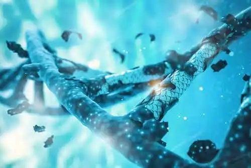 Secvență de ADN distrus