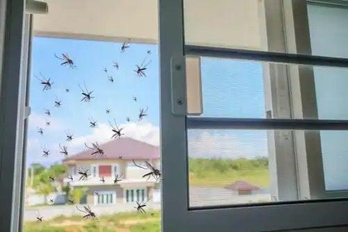 Tipuri de plase de țânțari pentru case