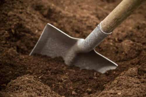 Tipuri de sol de grădină și caracteristicile acestora