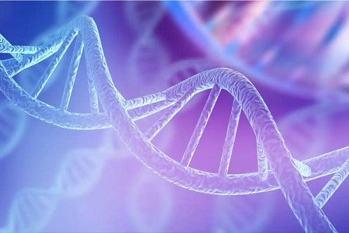 Secvență de ADN