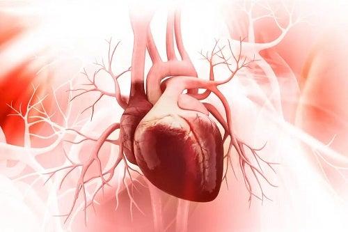 Inimă care pompează sânge