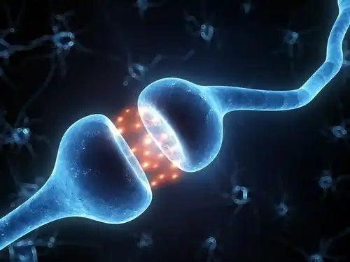 Neuroni care se unesc