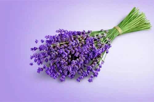 6 plante pentru ameliorarea durerii cu proprietăți analgezice
