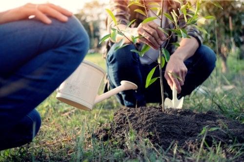 Tipuri de copaci pentru grădină și caracteristicile acestora