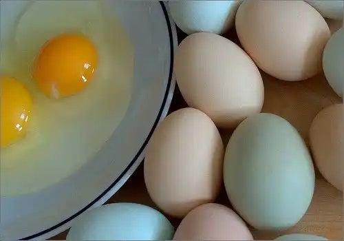 Tipuri de ouă