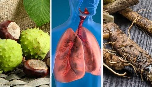 4 remedii casnice pentru întărirea plămânilor