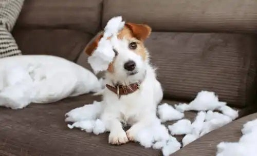 8 sfaturi pentru a avea o casă rezistentă la animale de companie
