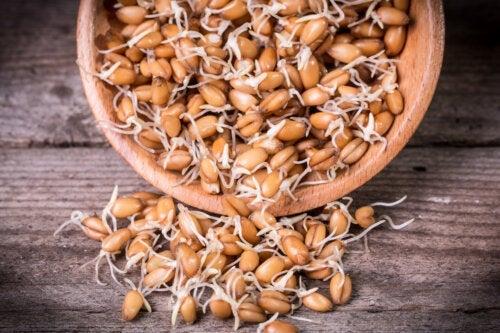 Germenii de grâu: beneficii, proprietăți și mod de preparare