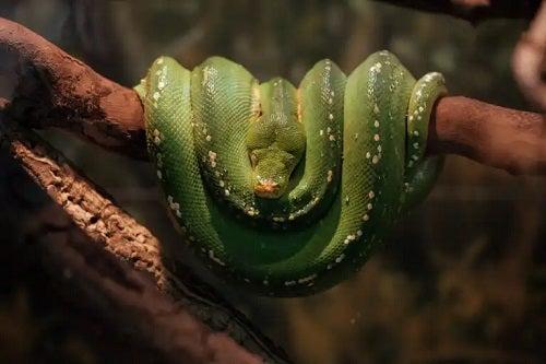 Ce înseamnă să visezi șerpi?